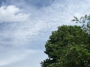 Advancing moisture aloft with cirrocumulus undulatus